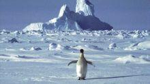 ONU: Se deben verificar altas temperaturas en la Antártida