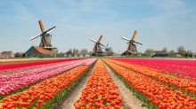 Dutch tourist board to stop promoting the Netherlands because it's getting too many visitors