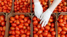 Eat Tomatoes to Fight Liver Cancer, Inflammation