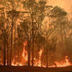 Threatened species hit hard by Australia's bushfires