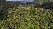 En Guyane, le projet polémique de la «Montagne d'or» corrigé