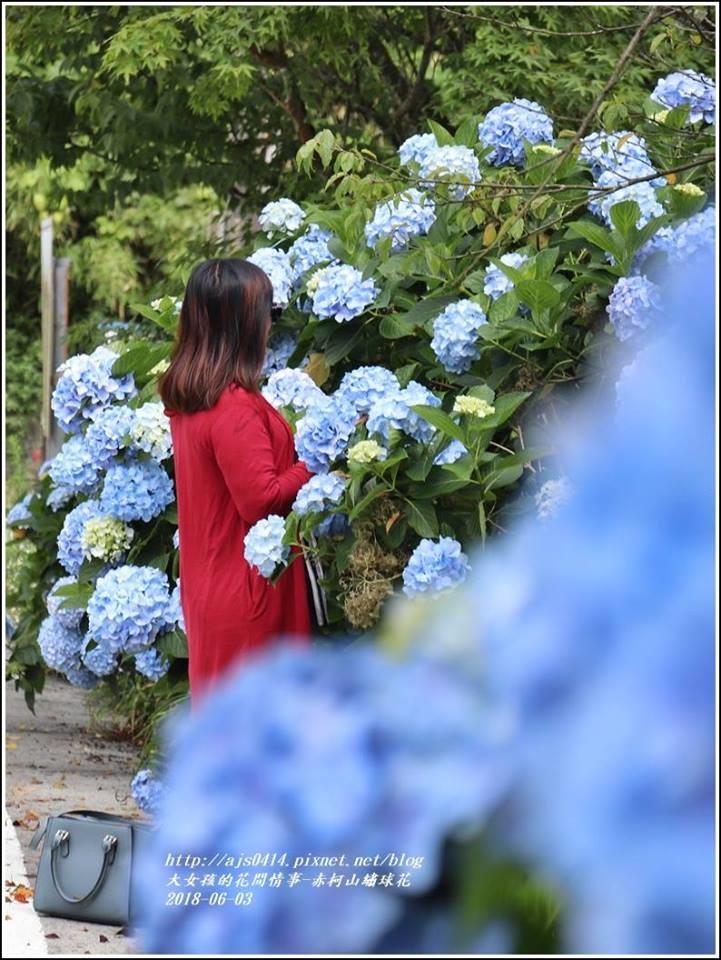 赤柯山繡球花-2018-06-18.jpg