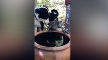 La amistad entre un perro y un koala sediento víctima de los incendios de Australia conquista las redes