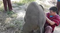 Adorable Baby Elephant Loves Cuddling!
