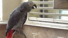 Listen to this talking parrot watch and comment on the squirrels outside