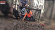 Un cochon sauvage dans une cage attaque ses sauveurs (vidéo)