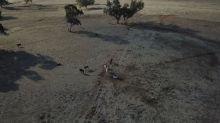 Ganaderos australianos viven peor sequía en medio siglo
