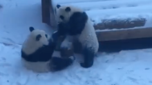 Twin Pandas Have Epic Snow Day as Zoo Atlanta Closes Due to Weather