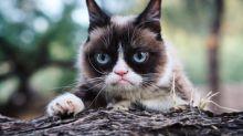 El gato que produce más de 100 millones de dólares