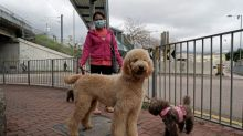 No Evidence to Support Spread of Coronavirus from Dogs to Humans, Say Researchers