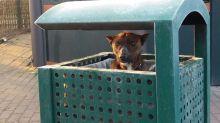 Cachorro encontrado en una papelera a menos cero grados