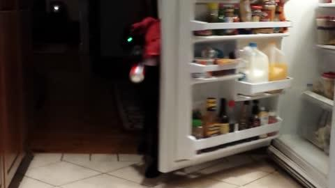 Dog Gets Beer From the Fridge
