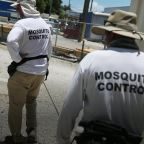 Genetically modified mosquitoes released in Florida; project aims to tackle disease