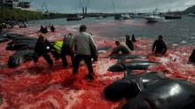 Bolsonaro takes on Norway for whaling, but bungles it
