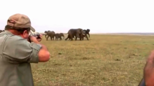 Shocking footage shows elephants charge at hunters after one of them is shot 'between the eyes'