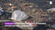Gli scienziati hanno scoperto agenti inquinanti nelle ostriche