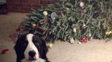 Perros y gatos que destrozaron las Navidades