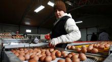 Egg supply tightens in Poland as EU bird flu crisis hits industry