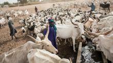 In Senegal's north, Fulani herders boxed in by virus