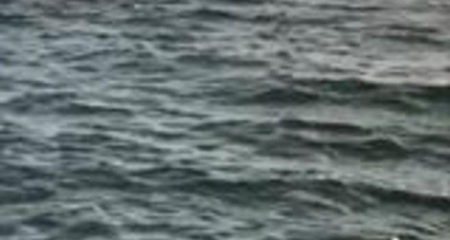 Rare Whale Spotted Off Coast of Naples, Florida