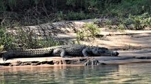 Girl snatched by crocodile off river bank while washing dishes