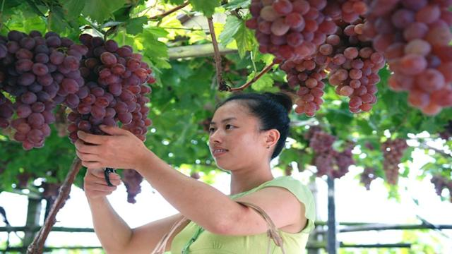 Global Fine Wine Market: Follow the Money to China