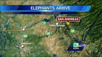 3 elephants from Canada make journey to CA thanks to game show host
