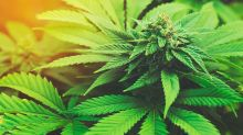 Marijuana Stocks Rout Continues As Canopy Growth Loses Market Share