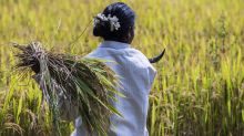 Crop Insurance Scheme Likely To Get Rs 13,000 Crore In Budget 2018