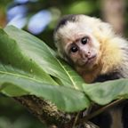 Scientists create human-monkey hybrid embryos in a lab