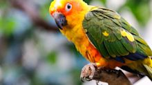 Woman who killed step-daughter's pet parrot jailed 4 weeks