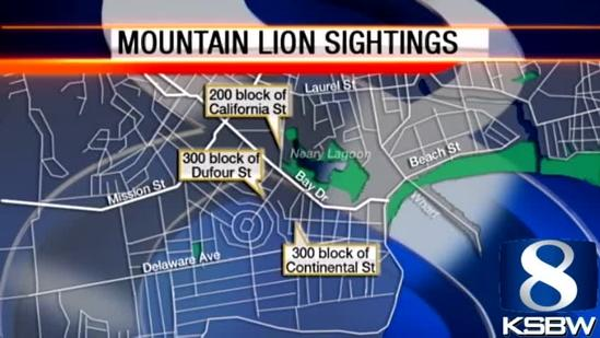 Mountain lion spotted 3 more times in Santa Cruz