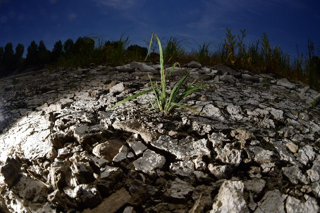 The last three years have been the hottest recorded on Earth (AFP Photo/Tobias SCHWARZ)