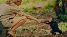 How Dr Jane Goodall became the first and only human accepted into a chimpanzee community