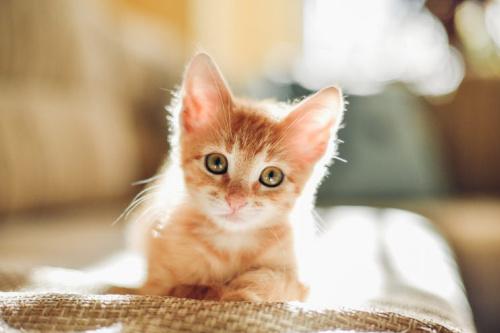 Stare at this cute kitten, save your relationship. It's a win-win.