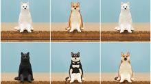日本超可愛「座る犬」扭蛋 排排坐好想儲齊一套