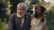 Ein Hundefreund fürs Leben: Das sind die DVD-Highlights der Woche