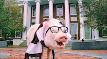 Christopher, el cerdo viajero más famoso de Instagram