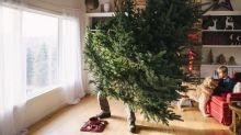Wissens-Adventskalender: Türchen 2 – Welche Tannenbäume sind wirklich nachhaltig?