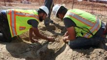 Colorado Construction Crew Finds 66-Million-Year-Old Triceratops Fossil