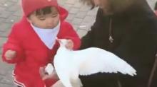 Lo que es mío... niña agarra por el pescuezo a una paloma que comía su pan