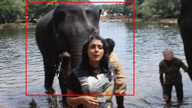 Elephant gets naughty with TV presenter