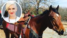 Gwen Stefani Calls New Horse #BestGiftEver, But It's Among the #PriciestGiftsEver, Too
