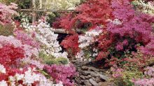The 10 Most Beautiful Shrubs to Plant in Your Yard
