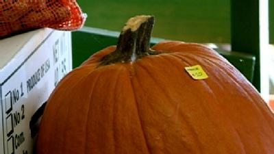 Dry Weather Hurts Local Pumpkin Farmers