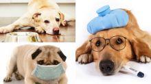 狗狗嘔吐有原因!狗奴必須知的3個應對方法