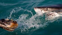 'Catastrophic' shark attack critically injures Australian spearfisher, officials say