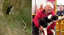 Jimmy the border collie rescued after stuck 20m down Bells Beach cliff