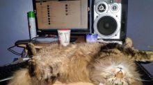 « Les plus beaux chats de twittos »: Et les gagnants de notre concours sont…
