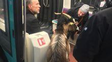 Paris : une chèvre provoque une brève interruption d'une ligne du métro